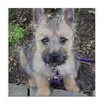 Emma Cairn Terrier 1 Tile Coaster