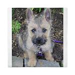 Emma Cairn Terrier 1 Queen Duvet