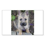 Emma Cairn Terrier 1 Sticker