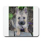 Emma Cairn Terrier 1 Mousepad