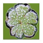Frosty Leaf Tile Coaster