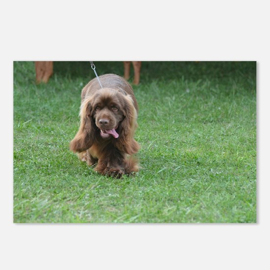 Cute Sussex Spaniel Postcards (Package of 8)