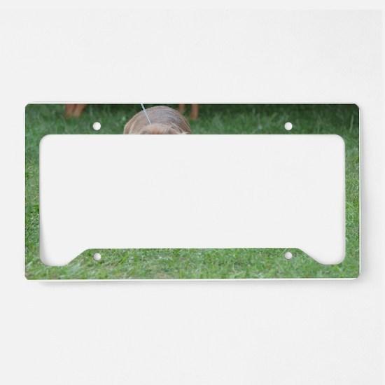 Cute Sussex Spaniel License Plate Holder