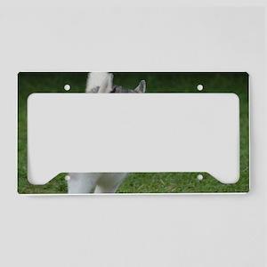 Siberian Husky  License Plate Holder