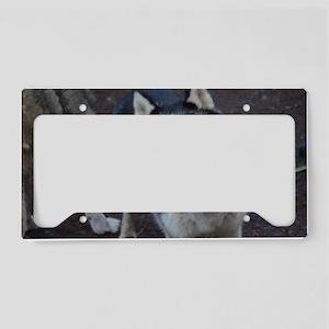 Blue Eyed Husky License Plate Holder
