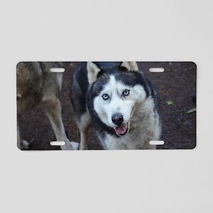 Blue Eyed Husky Aluminum License Plate