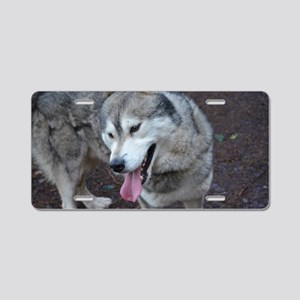 Sweet Siberian Husky Aluminum License Plate