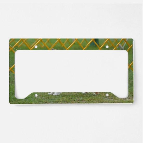 Sheltie at Attention License Plate Holder