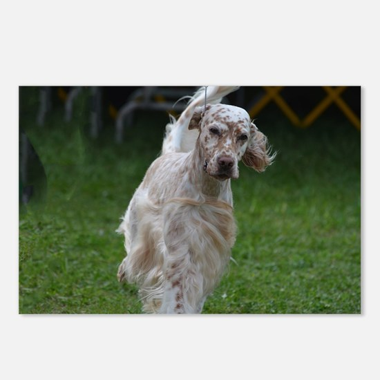 Adorable English Setter Postcards (Package of 8)