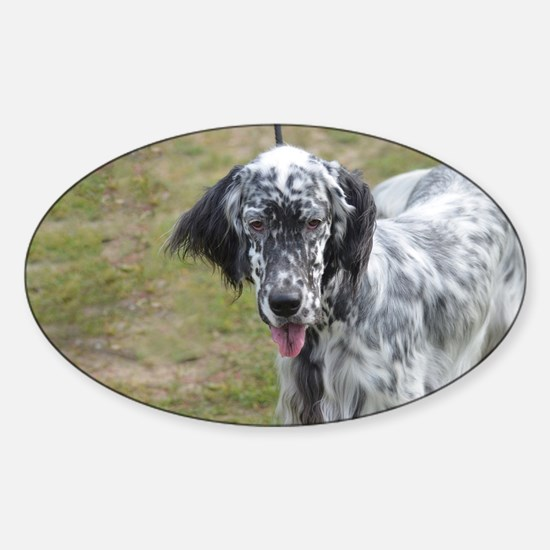 Sweet English Setter Dog Sticker (Oval)
