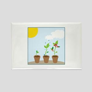 Seedlings Magnets