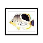 Saddleback Butterflyfish Framed Panel Print