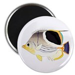 Saddleback Butterflyfish Magnets