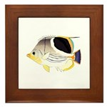 Saddleback Butterflyfish Framed Tile