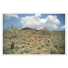 Cactus Pastoral Desert Large Poster