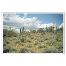Cactus Pastoral Sweep Large Poster