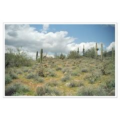 Cactus Pastoral Sweep Posters