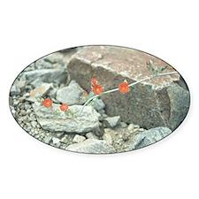 Desert Blossoms Sticker (Oval)