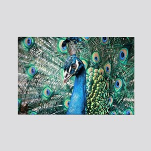 Beautiful Peacock Magnets