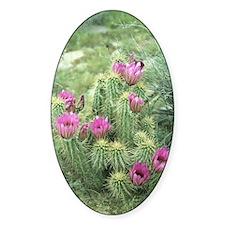 Pink Cactus Desert Sticker (Oval)