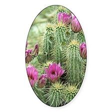 Pink Flower Cactus Sticker (Oval)