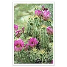 Pink Flower Cactus Large Poster