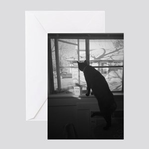 A cat & his window Greeting Card
