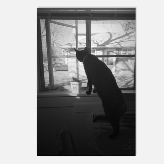 A cat & his window Postcards (Package of 8)