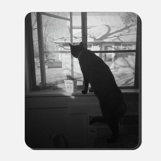 A cat & his window Mousepad