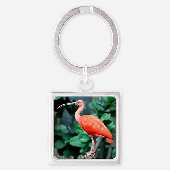 Stunning Scarlet Ibis Square Keychain