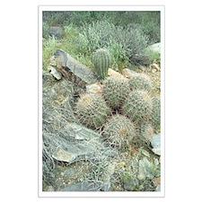 Saguaro Cactus Swirl Large Poster