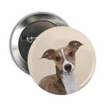 Italian Greyhound 2.25