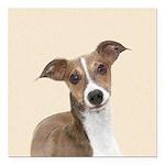 Italian Greyhound Square Car Magnet 3