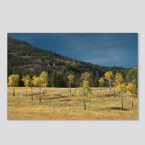 Aspen family of Yellowstone Postcards (Package of