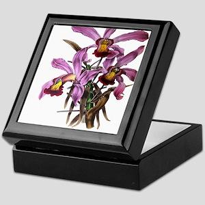 Paxton's Lalia Superbiens Keepsake Box