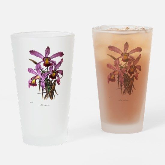 Paxton's Lalia Superbiens Drinking Glass