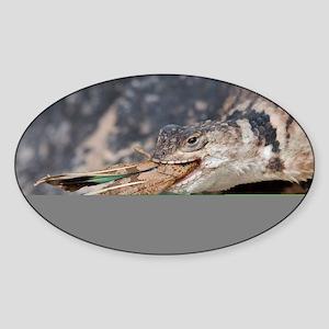 Crevice Lizard vs Grasshopper Sticker (Oval)