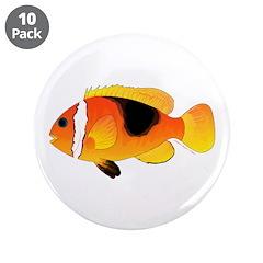Fire Clownfish 3.5