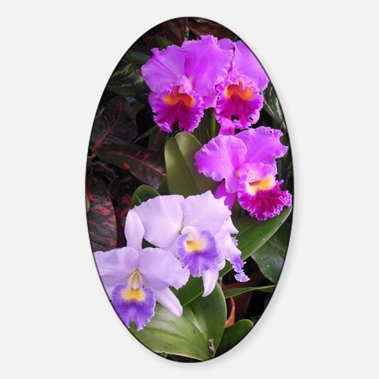 Orchids Sticker (Oval)
