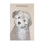 Havanese Puppy Mini Poster Print