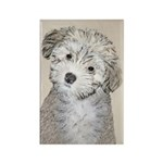 Havanese Puppy Rectangle Magnet (10 pack)