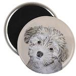 Havanese Puppy Magnet
