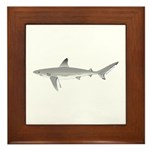Galapagos Shark Framed Tile