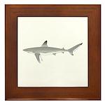 Galapagos Shark Framed Tile