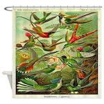 Vintage Hummingbirds Illustration Shower Curtain
