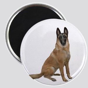 Belgian Malinois Magnet Magnets