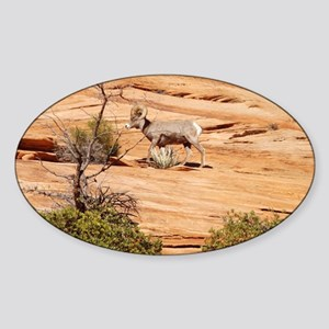 Roaming Big Horn Sheep Sticker (Oval)