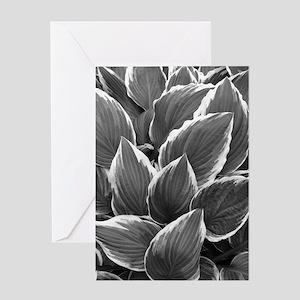 Hosta Leaves Greeting Cards
