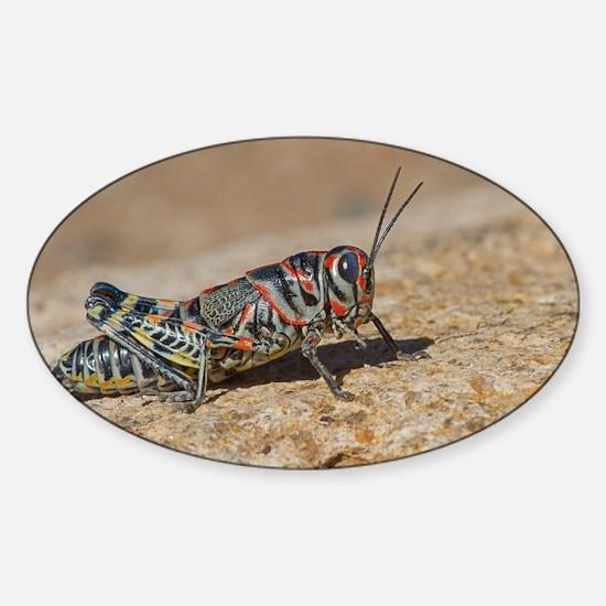 Colorful Grasshopper Sticker (Oval)