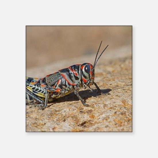 """Colorful Grasshopper Square Sticker 3"""" x 3"""""""